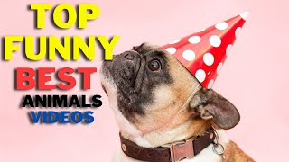 Top Funniest and Cute Pets    New and Top Videos    FunMaza
