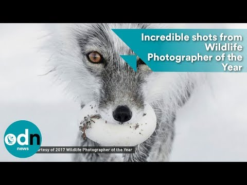 Incredible shots from Wildlife Photographer of the Year