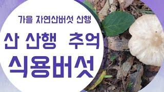 가을버섯산행시 주의점과 준비물