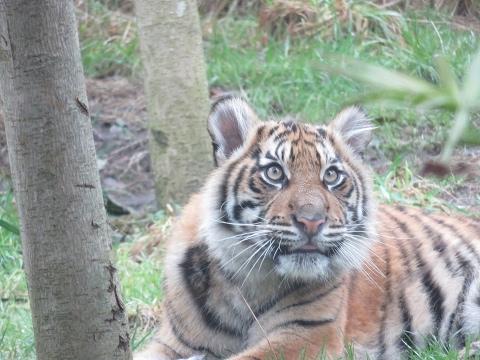 London Zoo Trip February 2017!