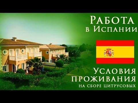 Работа в Испании | Условия проживания на сборе цитруса