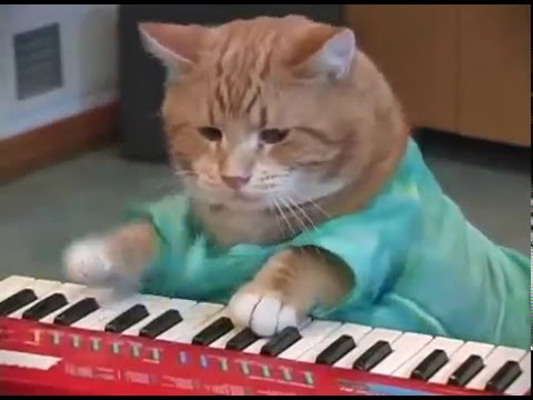 Funny Cat Playing Piano Youtube