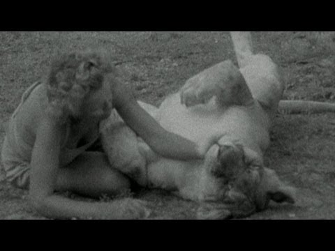 Getting Close to Elsa - Elsa the Lioness - BBC Four Attenborough Collection