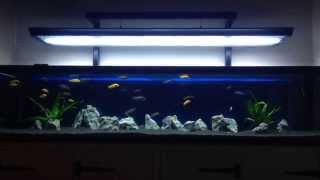 6ft Custom Malawi Cichlid Aquarium.