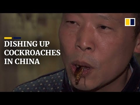 Cockroaches a cash cow for Chinese farmer who breeds them for food and medicine