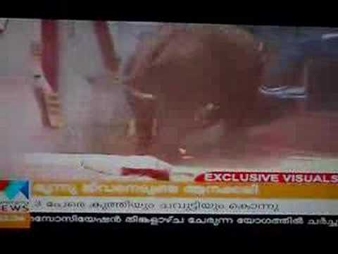 Kerala elephant attack youtube - photo#52