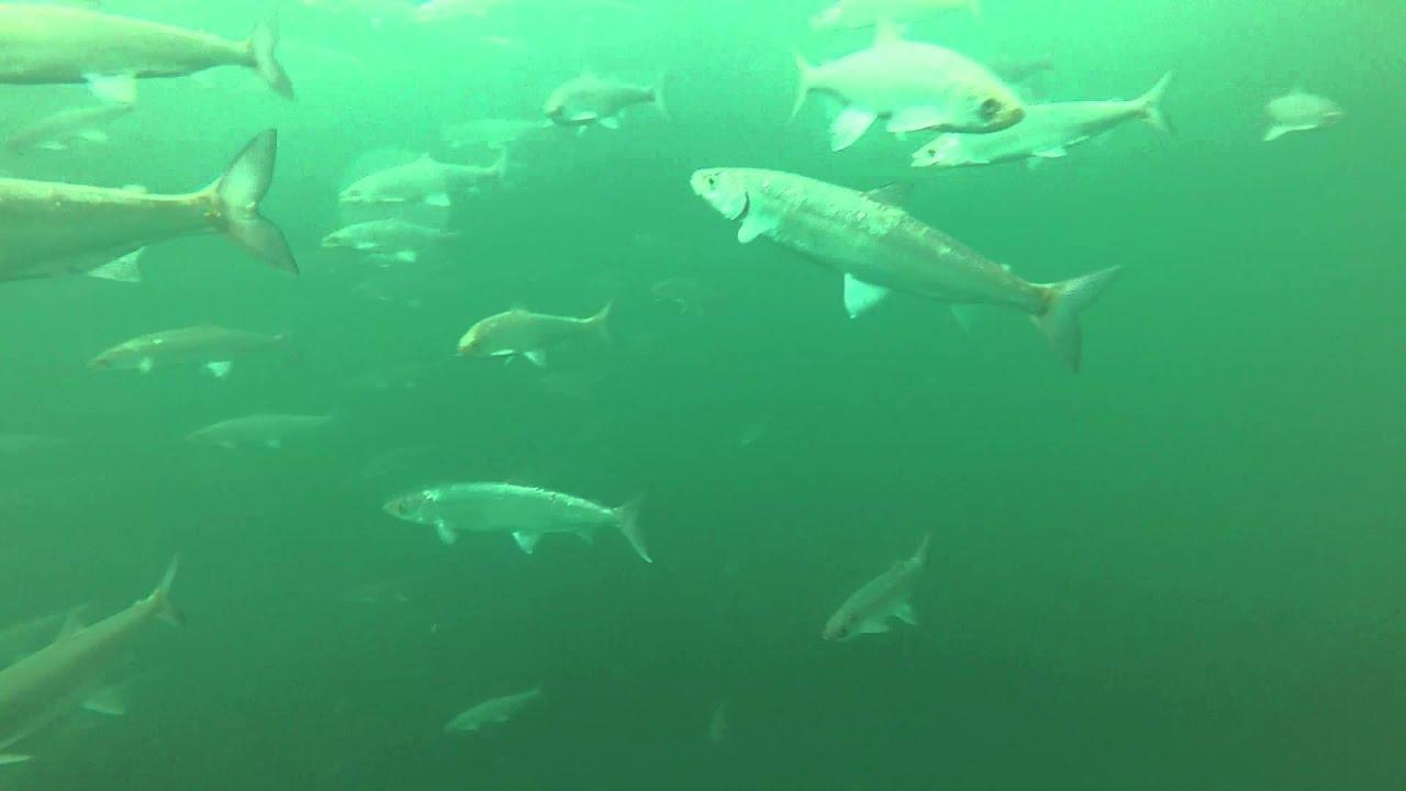 GoPro Underwater Ice Fishing Lake Superior - YouTube
