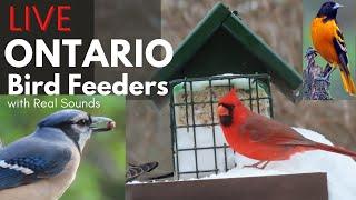 Preview of stream LIVE Birds FeederWatch 4K-CAM with Relaxing Nature Sounds - Ajax, Ontario, Canada