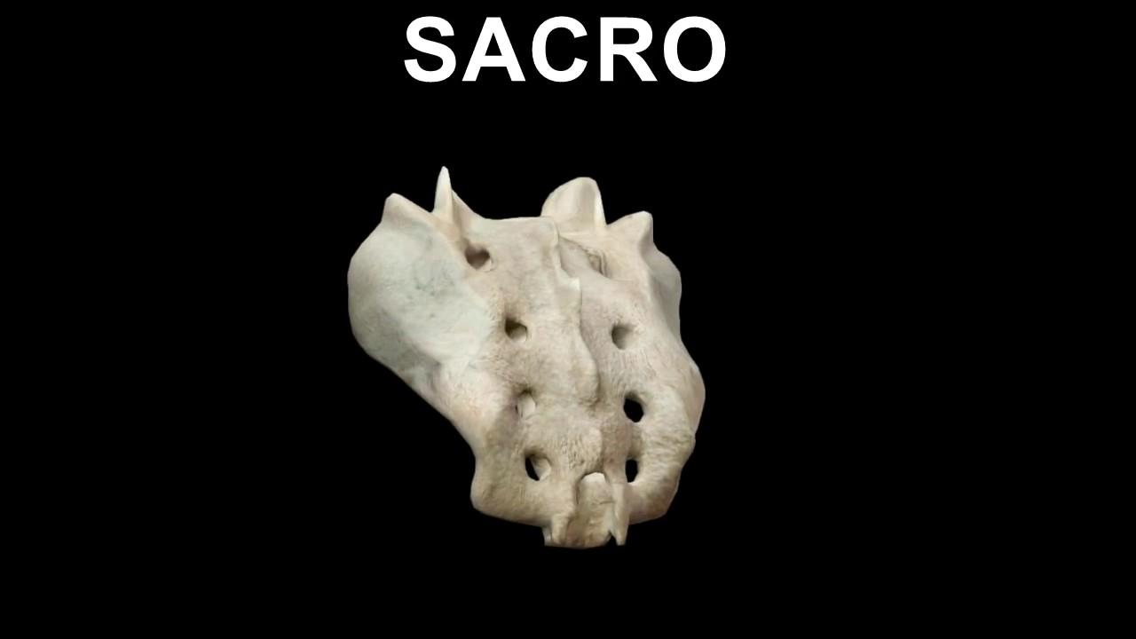 Anatomía de los huesos de la Columna vertebral en 3D - YouTube