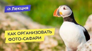 Как организовать фото-сафари на примере России и Африки