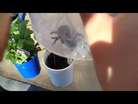 Funnel web in the garden