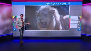أسد يقتل صاحبه في السعودية ومطالب بمصادرة الحيوانات المفترسة من أصحابها