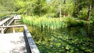 Floating Bridge Over Pond, Van Dusen Garden
