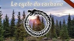 Le cycle du carbone - CARBONE#1