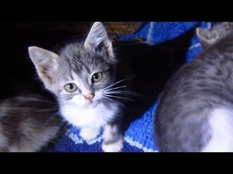 Five kittens move to a new place