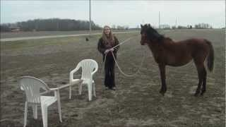 Yearling Horse Training: Lunging Over a Jump.