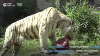 Животные спасаются от жары