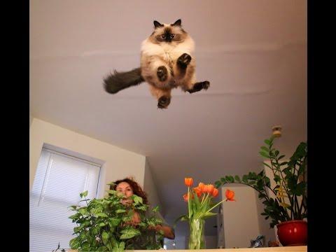 Funny Cat Attack Videos – Cat Dance – Best Smile Maker