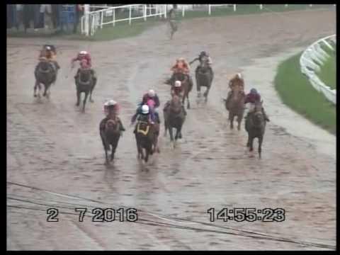 ม้าแข่งสนามโคราช 3 ก.ค. 2559 ครบทุกเที่ยว