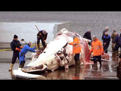 Help End Commercial Whaling!