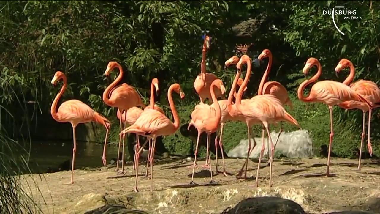 zoo parkplatz duisburg