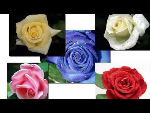 цветы для презентации картинки анимация