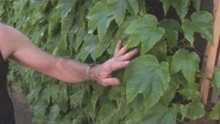 How To Select Climbing Plants