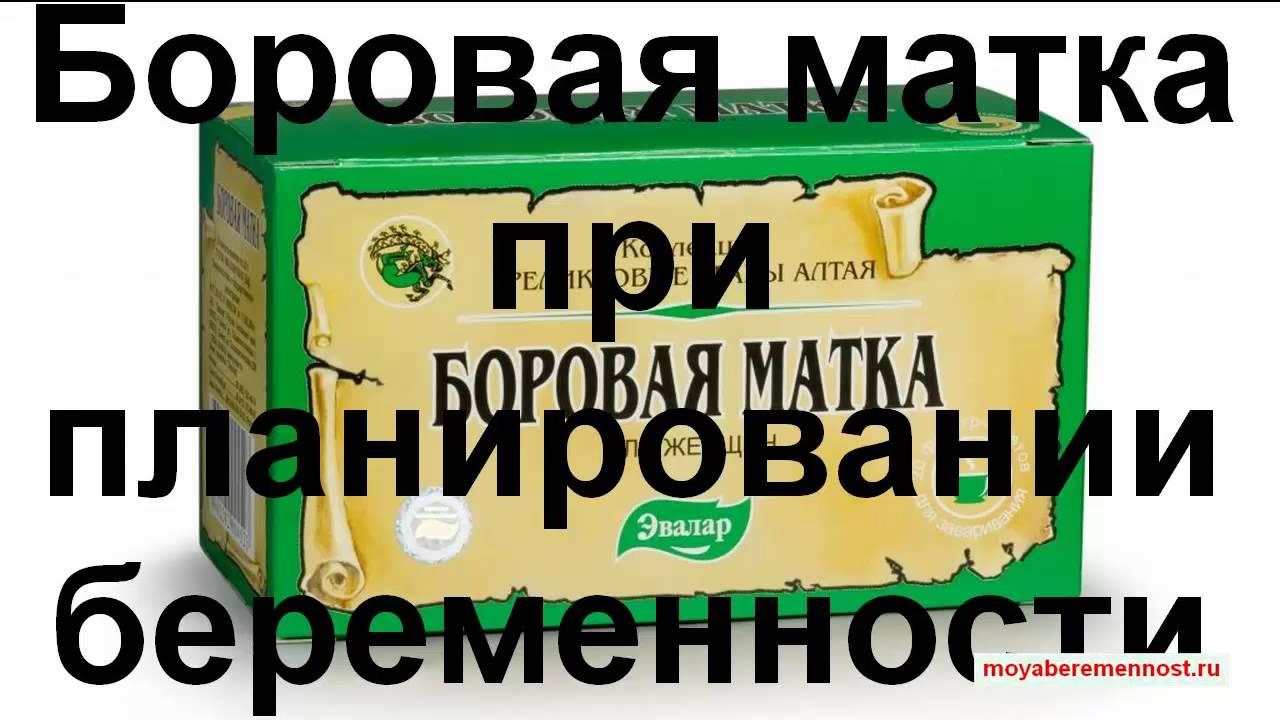 БОРОВАЯ МАТКА - ЧУДО-ТРАВА ОТ 40 БОЛЕЗНЕЙ - YouTube