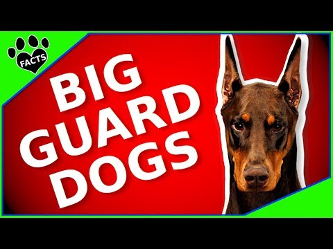 Best Guard Dog Breeds - 10 Dogs That Will Protect You