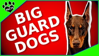 Best Guard Dog Breeds  10 Dogs That Will Protect You