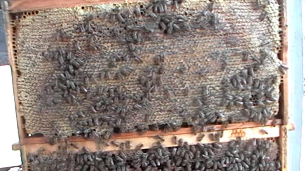 Polaznici će biti upoznati s bolestima i štetnicima u pčelarstvu koji su se na području.