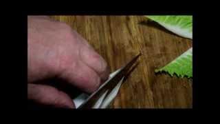 Семга припущенная в мисо бульоне с овощами