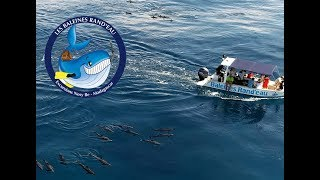 Baleines Rand'eau_No comment !