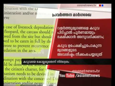 New tiger Guideline  issued in National Tiger Conservation Authority: Asianet News Exclusive