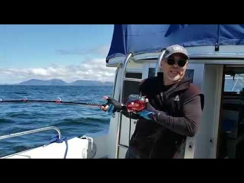 Daiwa Seaborg mj 800 catch Big Halibut