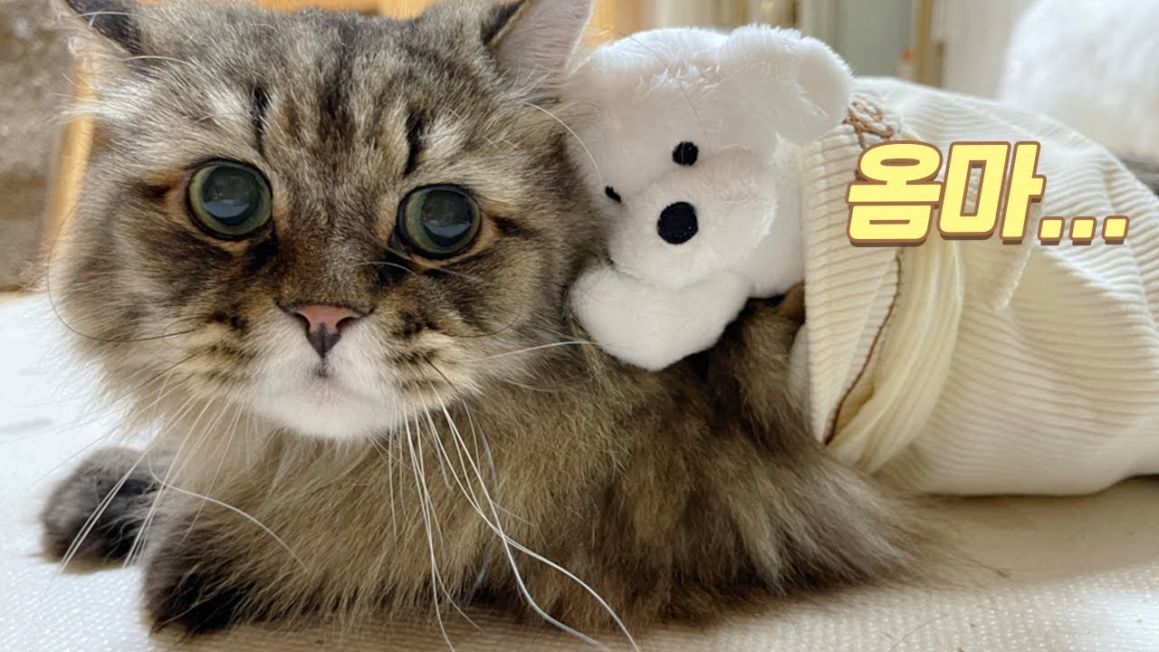 고양이에게 강아지 인형을 주면 생기는 일