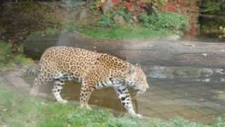 Zwierzęta w opolskim zoo
