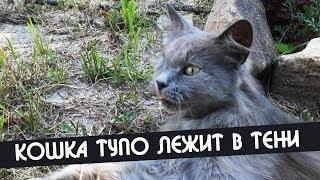 Кошка лежит в тени деревьев | Она не вялая, ей просто по кайфу