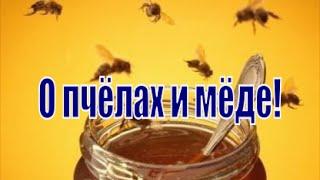 О пчелах и мёде! Как правильно выбрать мёд и как обманывают пасечники-бизнесмены.