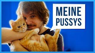 Geschichten meiner Katzen, die euch schnurren lassen!