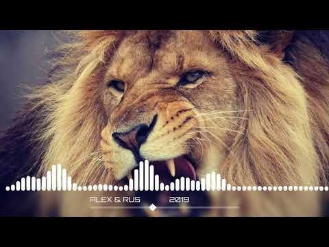 ALEX & RUS ДИКАЯ ЛЬВИЦА Music version HD mp3