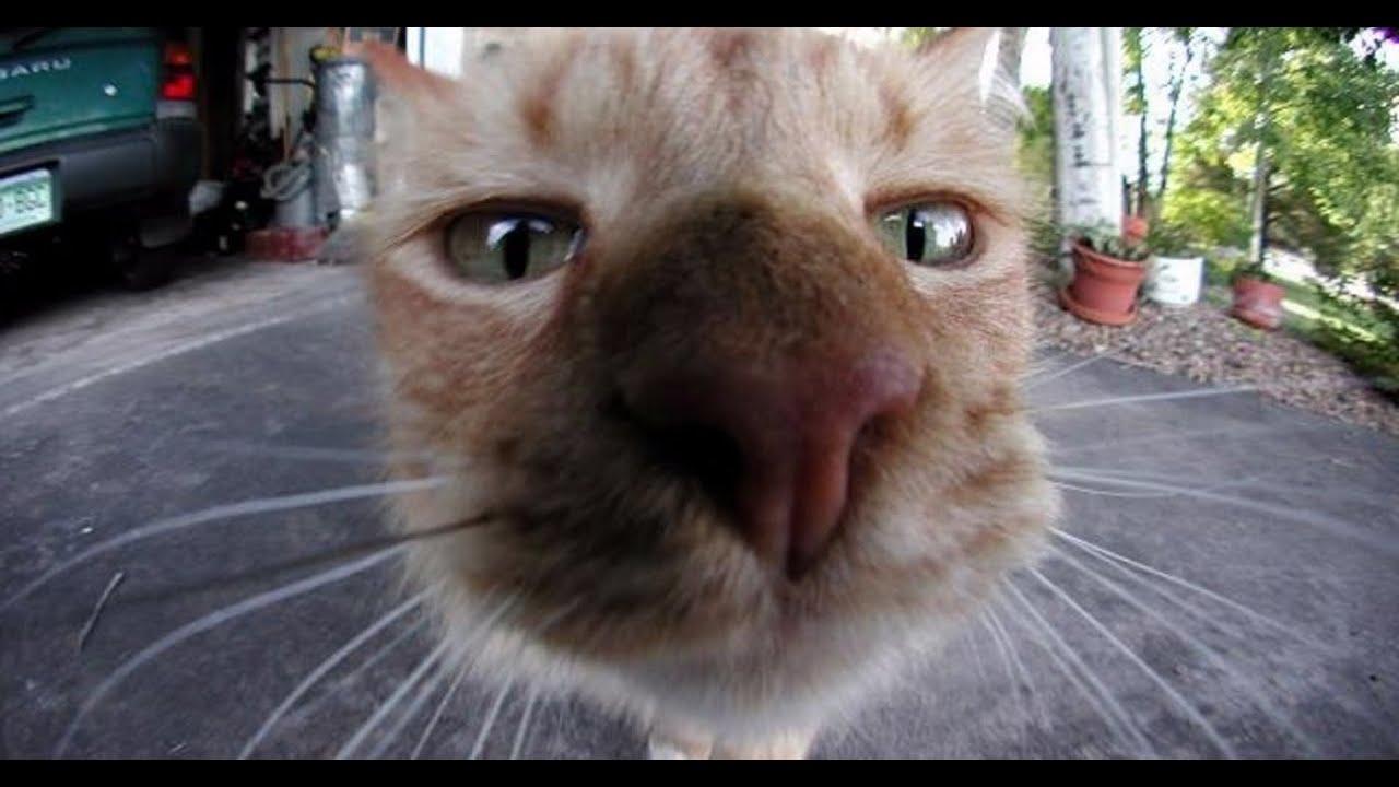 Слушать видео про котов