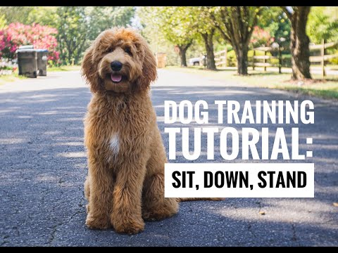 Dog Training Tutorial: Sit, Down, Stand