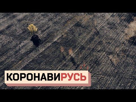 КОРОНАВИРУСЬ: Как провинция убивает себя на карантине