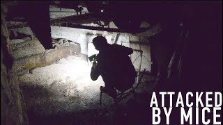 Getting Attacked By Mice in Basement of an Abandoned Mill