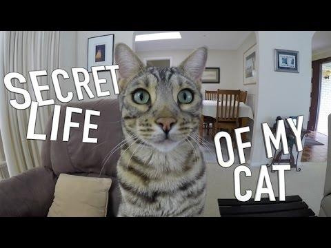 SECRET LIFE OF MY CAT - BOOMER