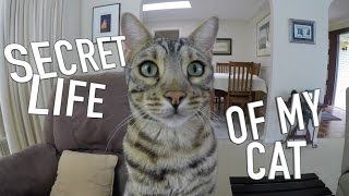 SECRET LIFE OF MY CAT  BOOMER