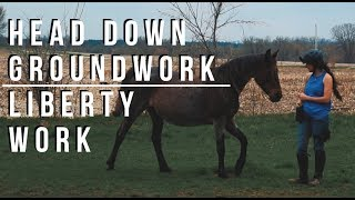 Training session - Head down groundwork and riding, liberty work.
