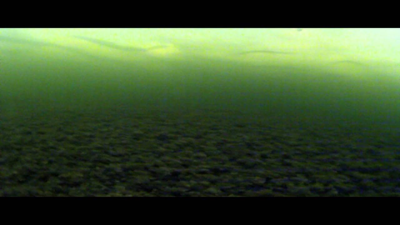 почему не клюет карп видео под водой