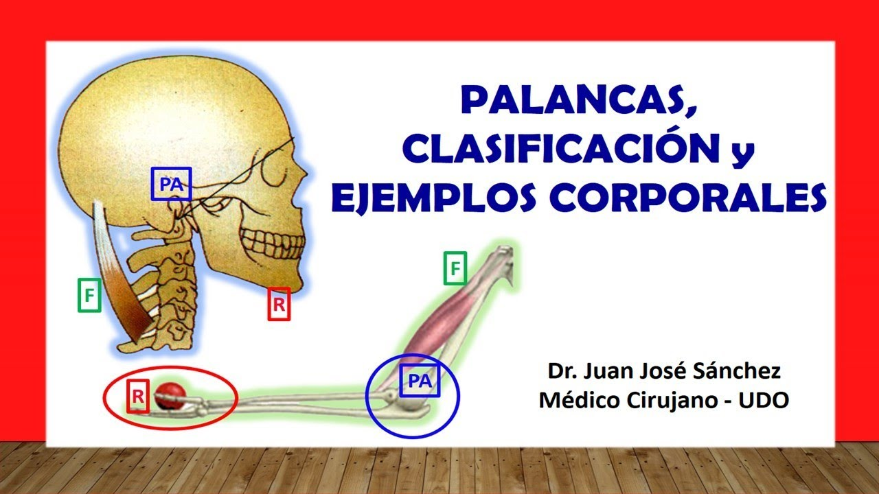 Palancas, Clasificación y Ejemplos Corporales en Anatomia - YouTube
